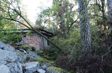 Sturmschäden beseitigt