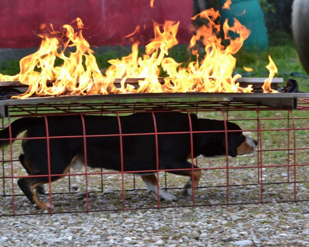 Österreichische Rettungshundebrigade Vorarlberg zu Gast