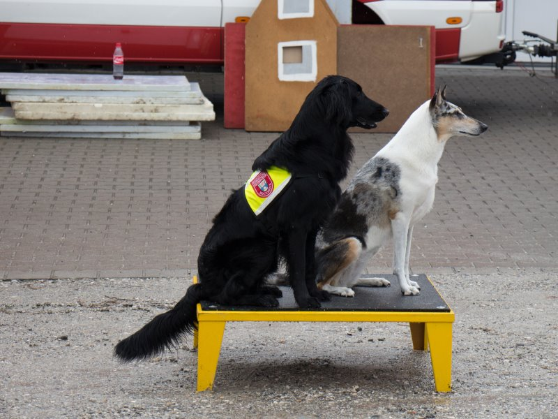 Paroshunde-Sommerfest